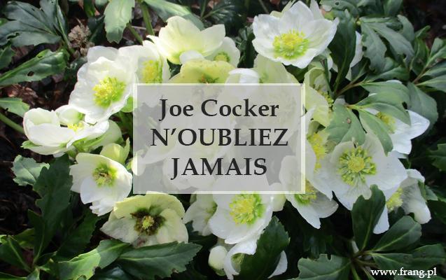 Joe Cocker - N'oubliez jamais,